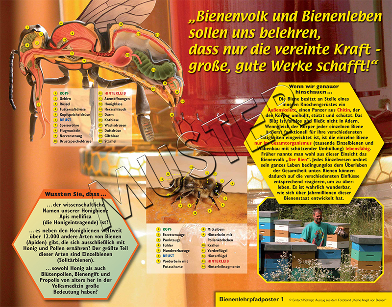 Bienenlehrpfad Imkerei Bio Tirol