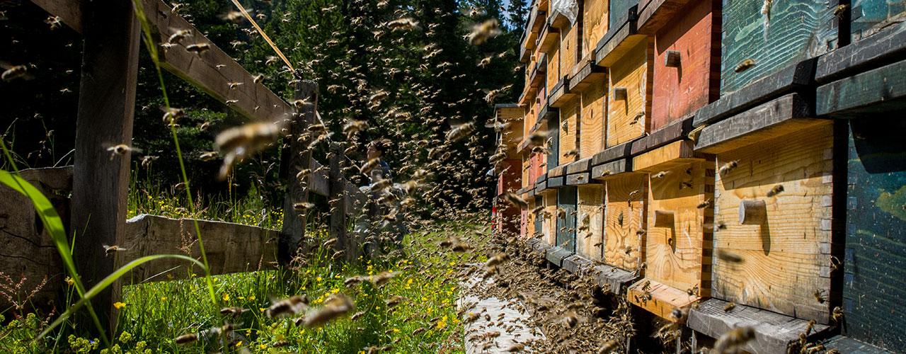 Bio-Honig aus dem Hochgebirge (Kühtai)